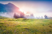 Colorful sunrise in foggy summer mountains — Stock Photo