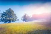 Morning in the Stara Fuzina village park. — Stock Photo