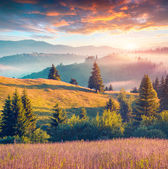 Morning in the Carpathian mountains. — Stock Photo