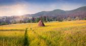Haymaking in a Carpathian village.  — Stock Photo