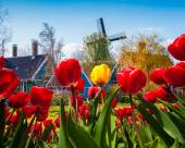 Wiev through  tulips in the Netherlands village — Zdjęcie stockowe