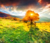 Lonely autumn tree against dramatic sky in the mountains — Stock Photo