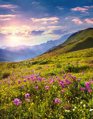 Flowers in the Caucasian mountains — Stock Photo