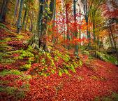 Morgon i skogen berg. — Stockfoto