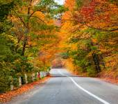 Road among the autumn forest — Stock Photo