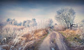 First frost in the forest. — Stock Photo