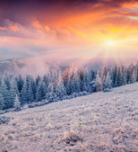 Sunrise in the mountain forest — Stock Photo