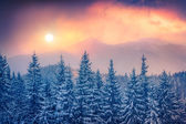Sunset in the Carpathian mountains — Stock Photo