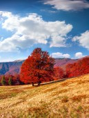 Mountains with lonely red beech — Stock Photo