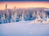Winter  in the Carpathian mountains. — Stock Photo