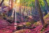 Autumn morning in mystical woods. — Stock Photo
