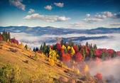 カルパティア山脈の朝. — ストック写真