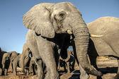 Group of elephants — Stock Photo