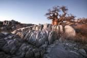 Trees in african desert — Stockfoto