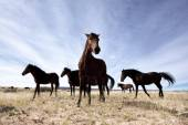 Wild horses of  Namib — Stock Photo