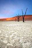 Deadvlei, Namib Naukluft Nationalpark — Stock Photo