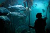 Woman watching fish — Stockfoto