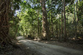 Road in tropical city — Stock Photo