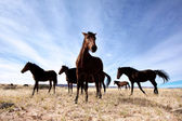 Beautiful wild horses — Stock Photo