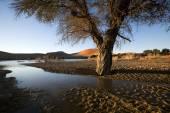 Landscape from Sossusvlei, Namibia — Stock Photo