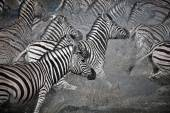 Black and white zebra flight — Stock Photo