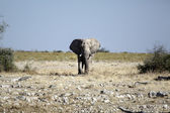 Zicht van de Namibische woestijn — Stockfoto