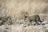 纳米比亚的荒野的景象 — 图库照片
