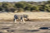 Oczach pustynię Namibii — Zdjęcie stockowe