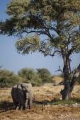 Dieren in het wild gevonden op Safari — Stockfoto