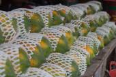 Papaya in the market — Stock Photo