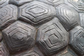 Tortoise shell is made from cement — Stock Photo