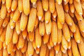 Corns for animal feeding — Stock Photo
