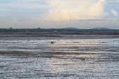 Landscape of mudflat — Stock Photo