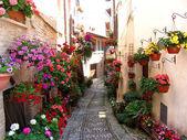 Windows, balcony and flower alleys in Spello - Perugia — Stockfoto