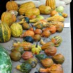Multi colored pumpkins — Stock Photo #56568173