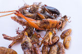 Crispy fried insects, grub larvae, Grasshopper, CRICKET — Stock Photo