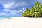 Palmeiras e praia tropical — Fotografia Stock