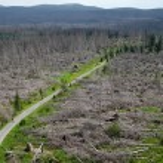 Dead trees in the Sumava National Park — Stock Photo