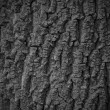 Tree bark texture background seamlessly tileable — Stock Photo #55917215