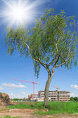Birch and unfinished building, crane, sky with sun — Stock Photo