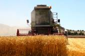 Working harvesting combine in the field of wheat — Stock Photo