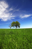 Field,trees, grass with blue sky — Stock Photo