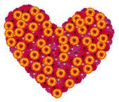 Heart from gerbera flowers — Stock Photo