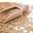 Wood spoon with whole wheat grains — Stock Photo #58274535