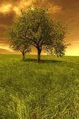 Field, trees at sunset — Stock Photo