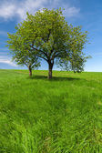 Spring landscape, field and blue sky — Stock Photo