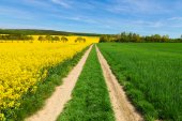 Campo de estupro, caminho com céu azul — Fotografia Stock