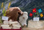 Composition cow and cheeses — Stock Photo