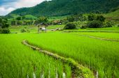 Fresh Terrace rice field  on mountain background — Foto Stock