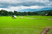 Terrace rice field  on mountain background — Stock Photo